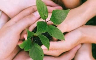 Zdjęcie przedstawia nałożone na siebie dłonie wielu ludzi, z których wyrasta zielonolistna roślina.